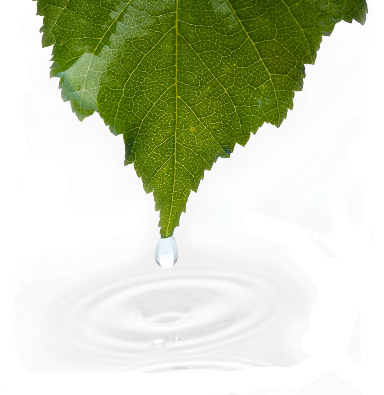 green-company-cleanvy_2021